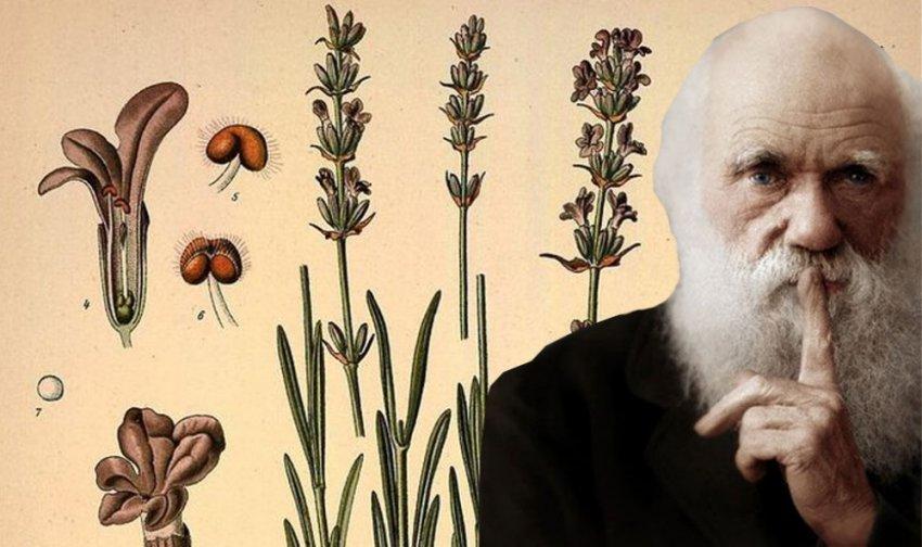 """Теория эволюции: """"Ужасная тайна"""" Дарвина"""