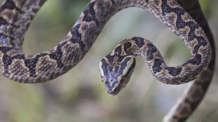 Почему змеи на праздник Воздвижение Креста Господня сплетаются в клубок